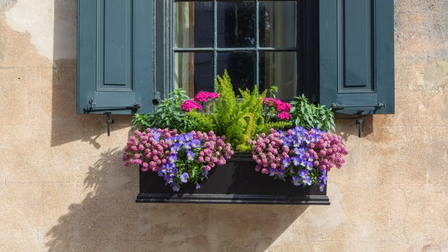 How to Plant a Window Box Garden and Keep It Alive