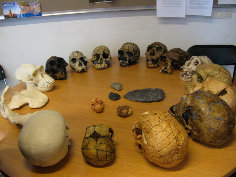 Illustration for article titled Can you name the stages of human evolution in this circle of skulls?