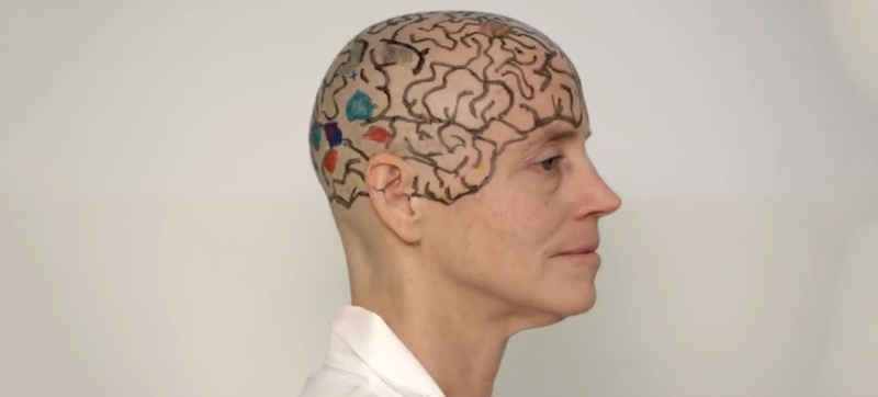 Illustration for article titled An MIT Professor Shaved Her Head To Teach You Neuroanatomy
