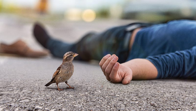 Illustration for article titled Bird Reflects On Frailty, Impermanence Of Life After Finding Dead Human On Sidewalk