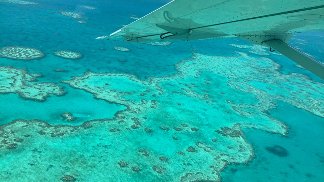 It s Horrific : Climate Change Is Killing the Great Barrier Reef