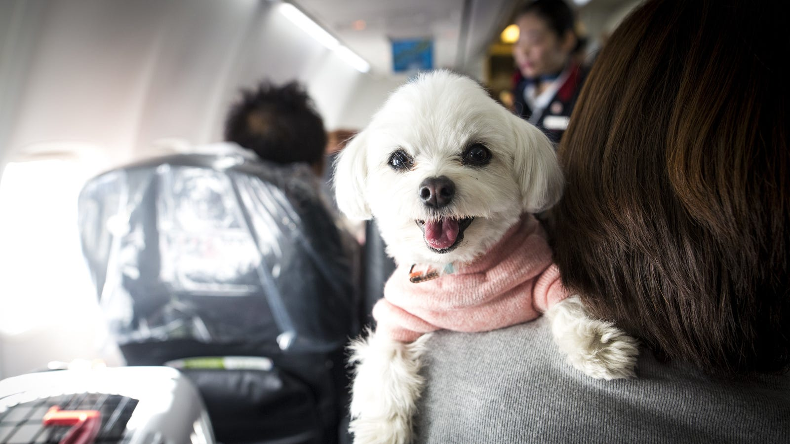 Delta is cracking down on emotional support animals for Delta airlines dogs in cabin