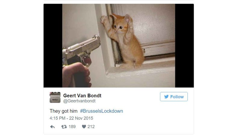 Illustration for article titled Belgian Twitter Users Are Supporting Police By Tweeting Cats