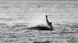 Illustration for article titled Dolphin hooligans are going around killing innocent porpoises
