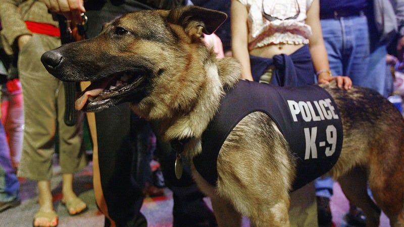 A K-9 police dog.