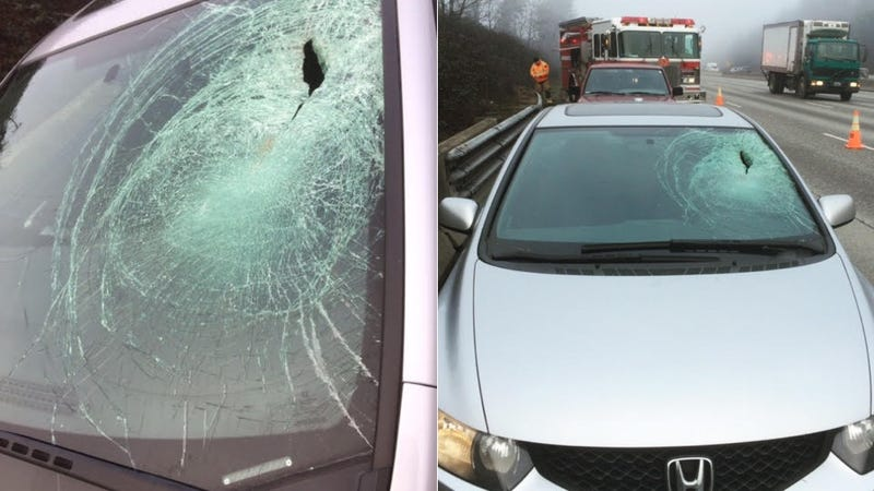 Illustration for article titled A Bird Flew Into This Woman's Windshield and Almost Murdered Her