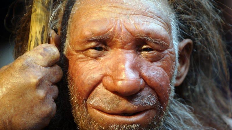 Illustration for article titled Por qué tenemos tan poco pelo en comparación con el resto de primates