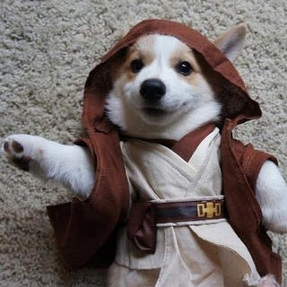 """Illustration for article titled """"These are not the snausages you're looking for."""""""