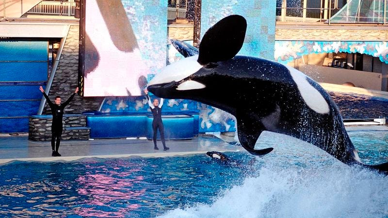 """Millions of Americans say they are """"100 percent in SeaWorld's corner again"""" after watching orca Kayla perform a """"completely sick"""" backflip."""
