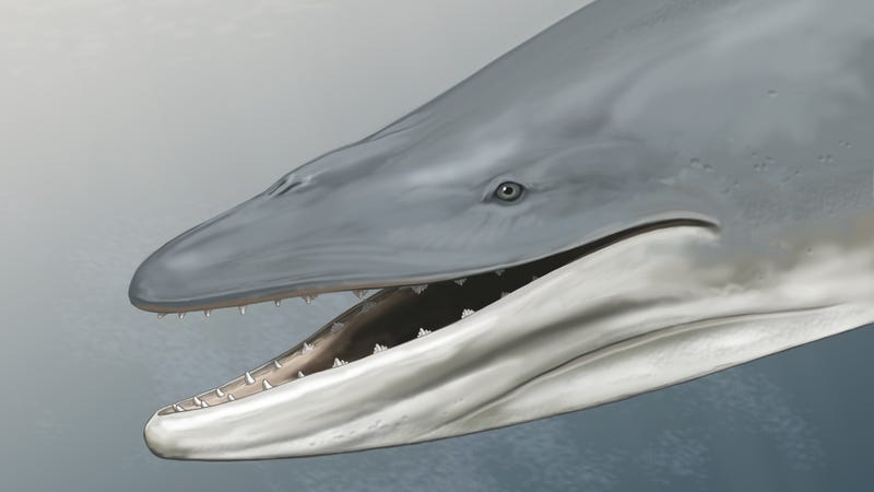 the ancient ancestors of blue whales hunted the oceans with