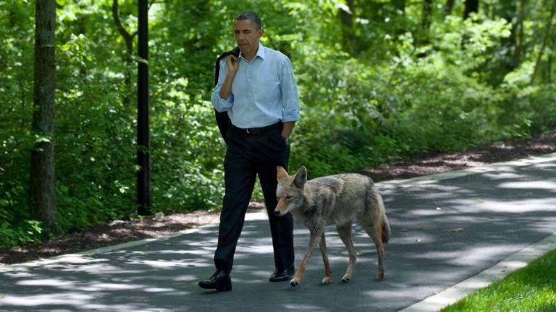 Obama offers his coyote counterpart aid in the form of a rabies vaccination program in exchange for official recognition of housing subdivision borders.