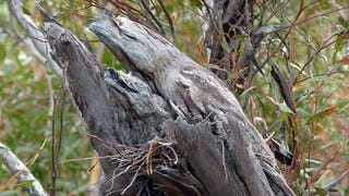 Watch How Dead Silent An Owl Flies Compared To Other Birds