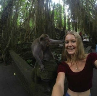 Illustration for article titled This Woman's Selfie with a Monkey Ended Very, Very Badly