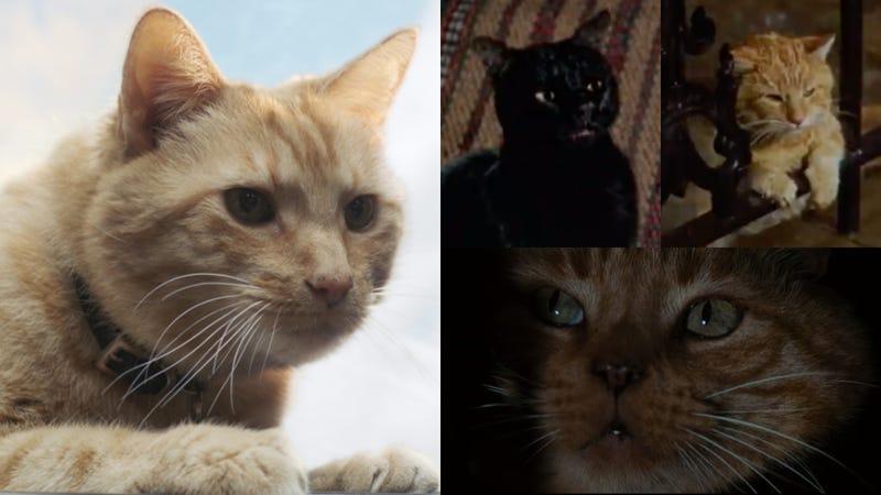 Clockwise left to right: Goose, Binx, Cat, and Jonesy