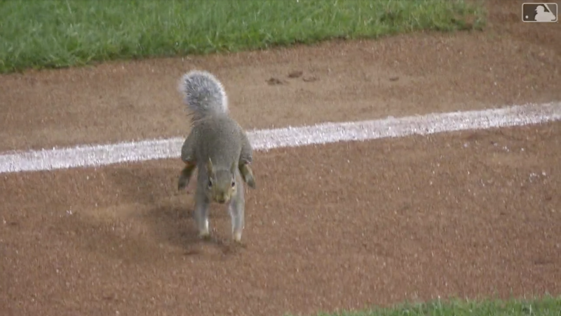 Illustration for article titled Idiot Squirrel On The Field Successfully Invades Consecutive Twins Games