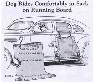 Illustration for article titled Best Auto Accessory Ever: Dog In A Bag