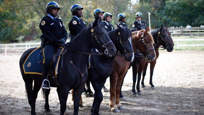Philadelphia Police horses in 2011. (Photo: Matt Rourke/AP)