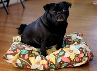 Illustration for article titled Weekend Project: Make your own pet bed for cheap