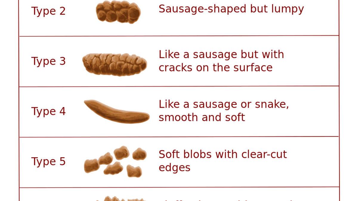 What Does The Shape And Color Of My Poop Mean