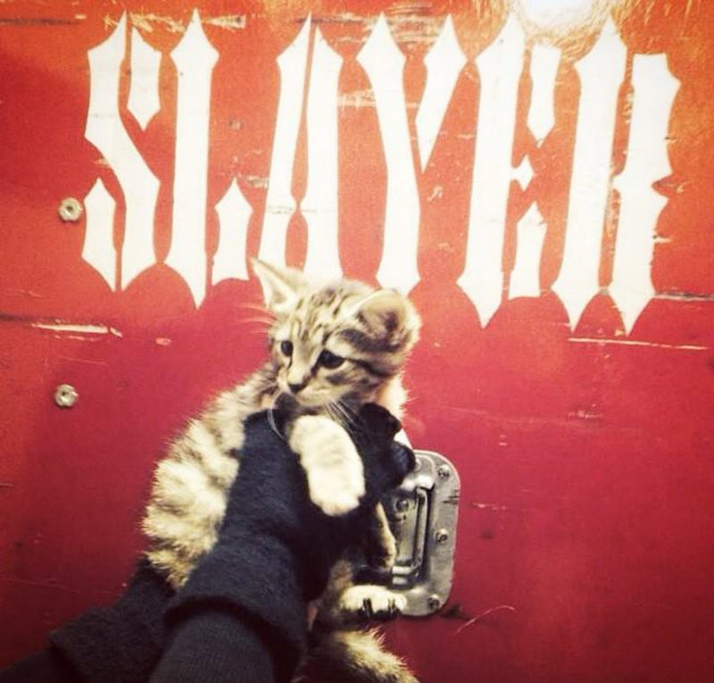 Illustration for article titled Slayer Rescued a Kitten, Because Nothing Is More Metal Than Kittens