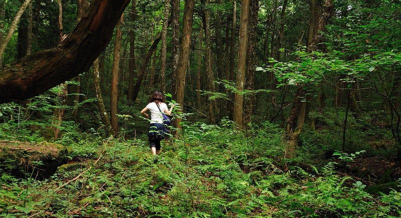 YouTuber graba a suicida en el Bosque Aokigahara