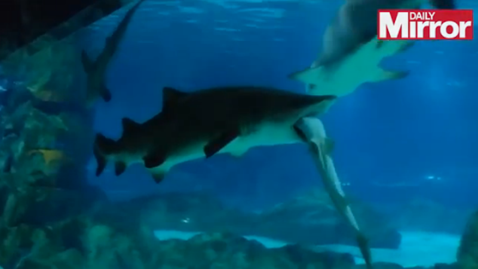 Female Shark in Seoul Aquarium Eats Male Shark Because He Kept Bumping Into Her