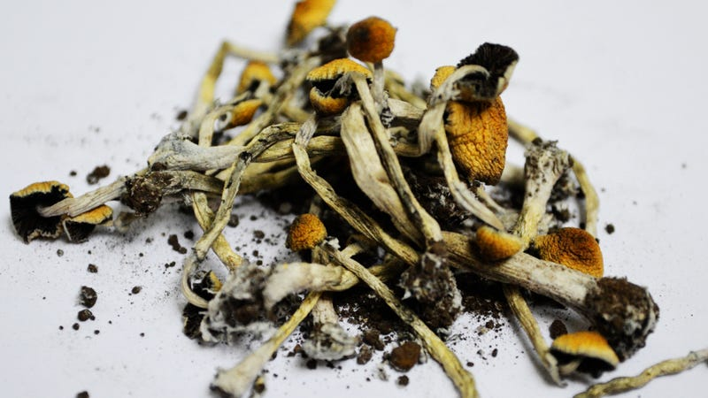 Scientists Finally Unlock the Recipe For Magic Mushrooms