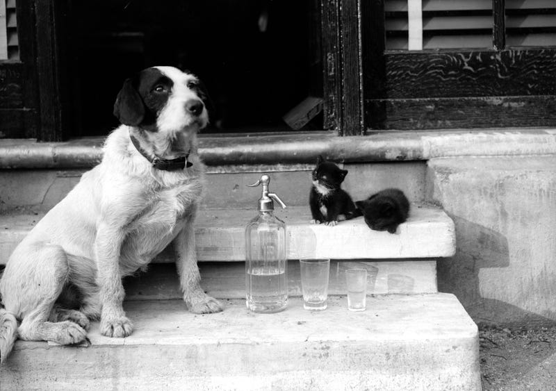 May 1929: Two kittens, a dog, and a soda siphon. (Photo: Fox Photos/Getty Images)