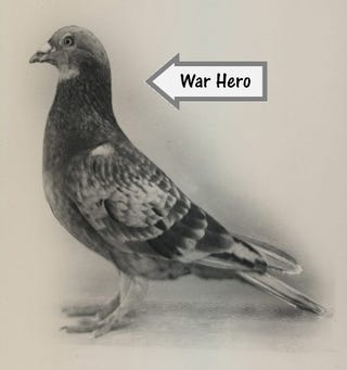 Animal Weapons – Videogames vs History