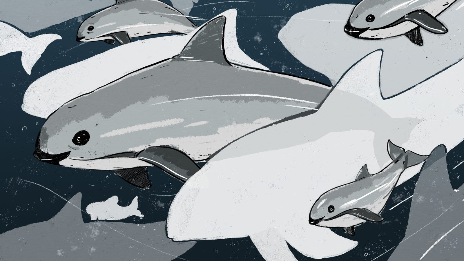 The Race to Save the World's Smallest Porpoise From Extinction