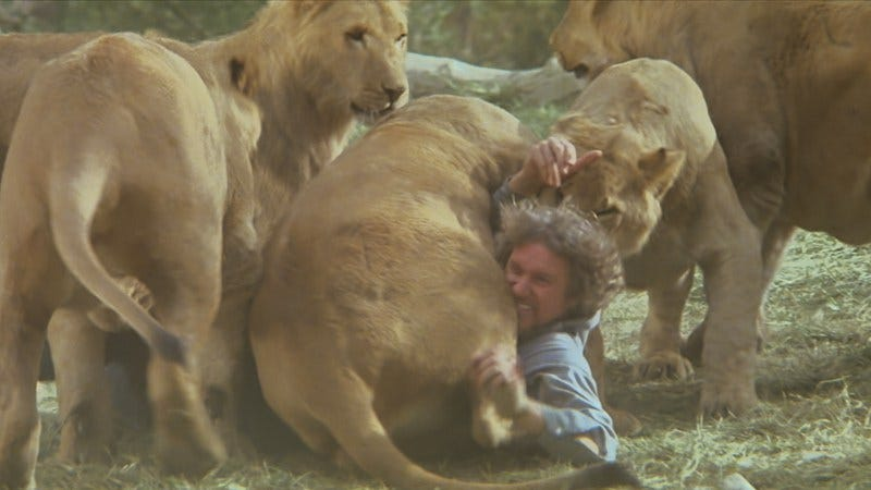 When You Let Actual Lions Direct Your Movie Expect To Be Mauled