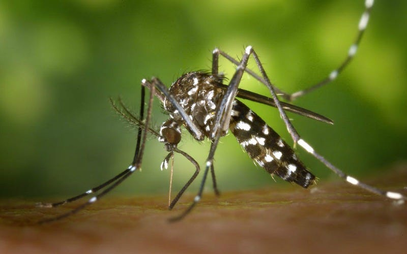 Illustration for article titled Qué hacer cuando te pican un montón de mosquitos
