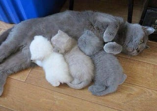 """Illustration for article titled """"The Kitten Color Printer Ran Out Of Ink And Toner"""""""