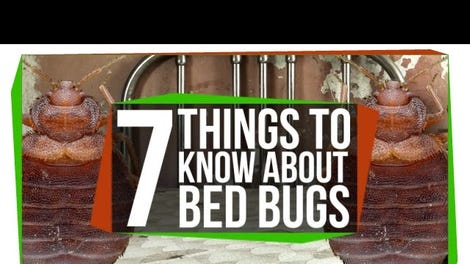 How To Know If Your Hotel Room Has Bed Bugs