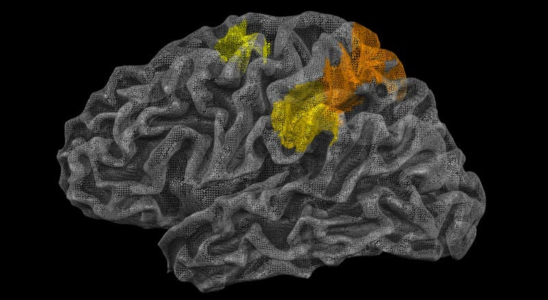 The location of the 'physics engine' in the brain is highlighted in color in this illustration. (Images: Jason Fischer/JHU)