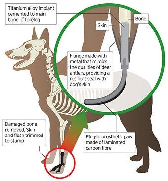 Illustration for article titled World's First Prosthetic Dog Paw Surgery Completed