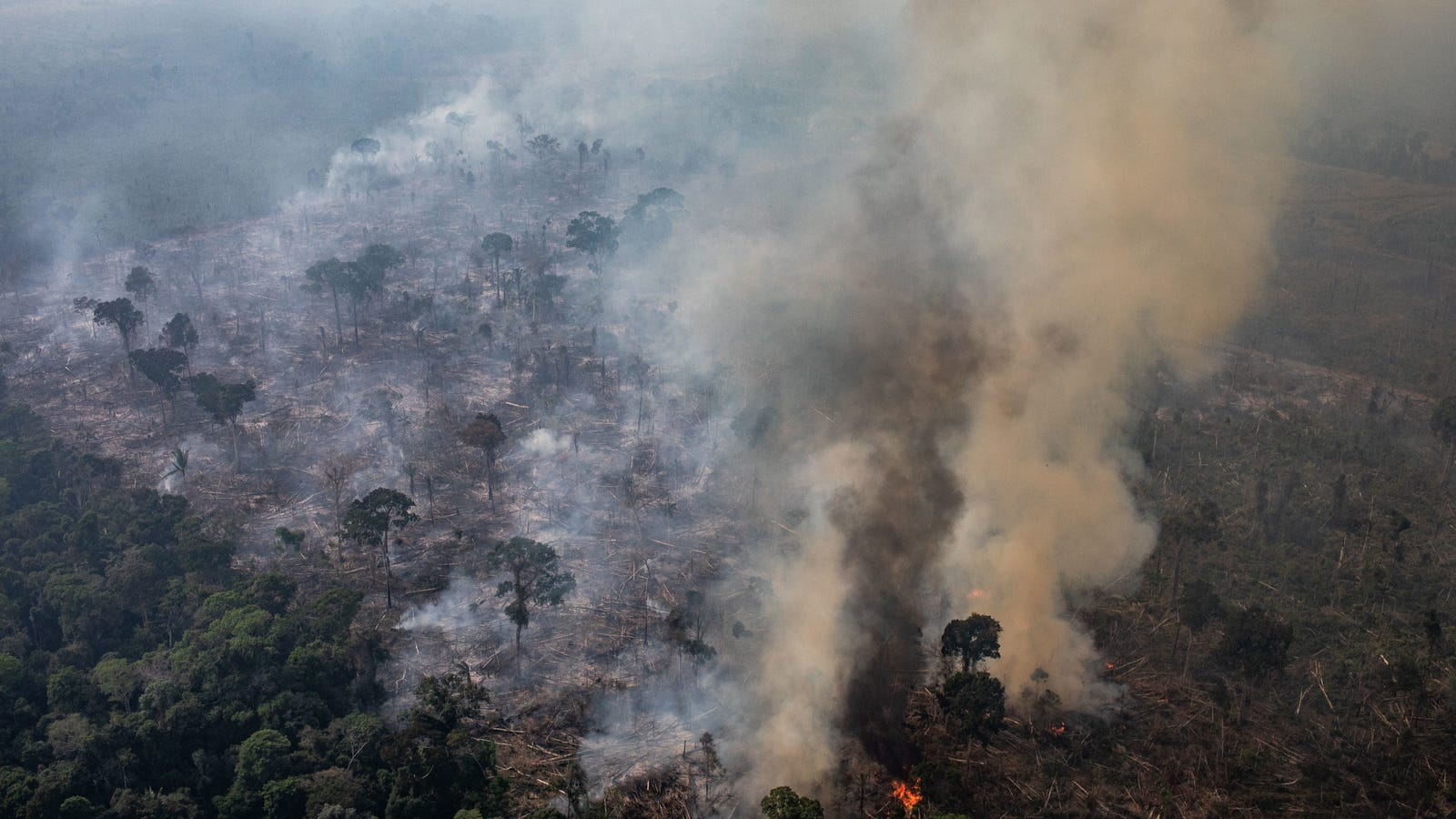 Track the Amazon Rainforest Fires With This Map