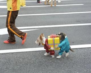 Illustration for article titled Aki látott már ennél aranyosabb kutyaruhát, az hazudik