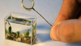 Illustration for article titled The World's Smallest Aquarium Only Holds Two Teaspoons of Water