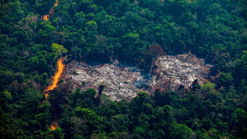 is the amazon forest still on fire