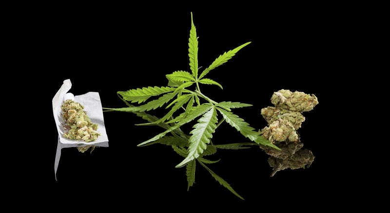 Illustration for article titled México por primera vez legaliza el cultivo y consumo de marihuana con fines lúdicos