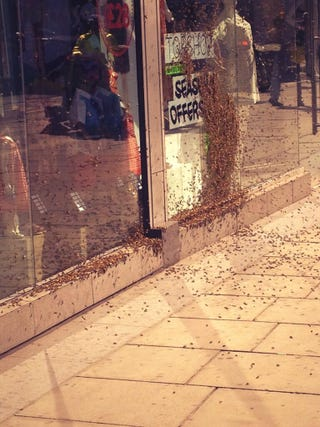 Illustration for article titled Swarm of honeybees descends on central London Topshop