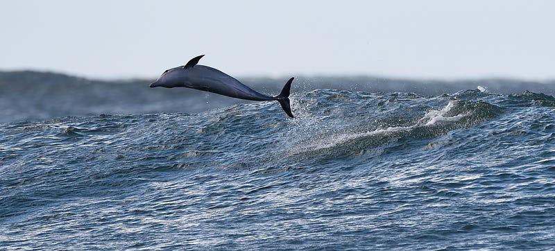 Image Credit: Getty Images/Matt Roberts