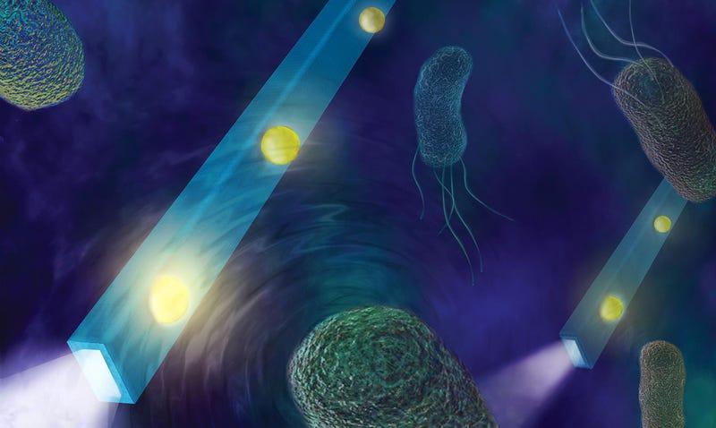Recreación artística del dispositivo midiendo el movimiento de bacterias. Imagen: Rhett S. Miller/UC Regents
