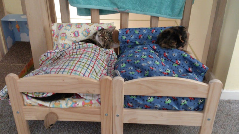 Illustration for article titled Cats in Ikea Doll Beds!