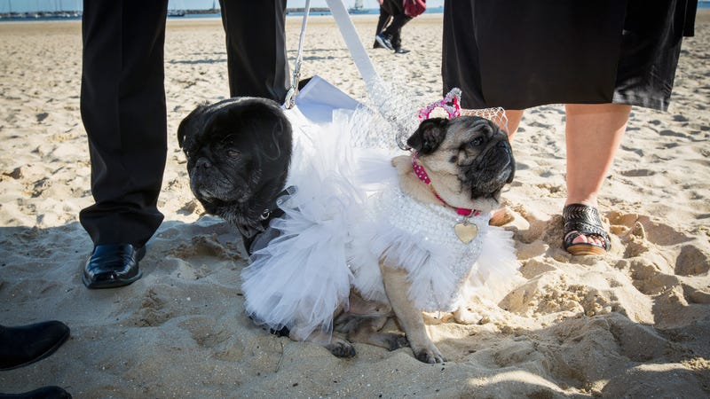 The only beach wedding I'd ever attend. Image: Getty