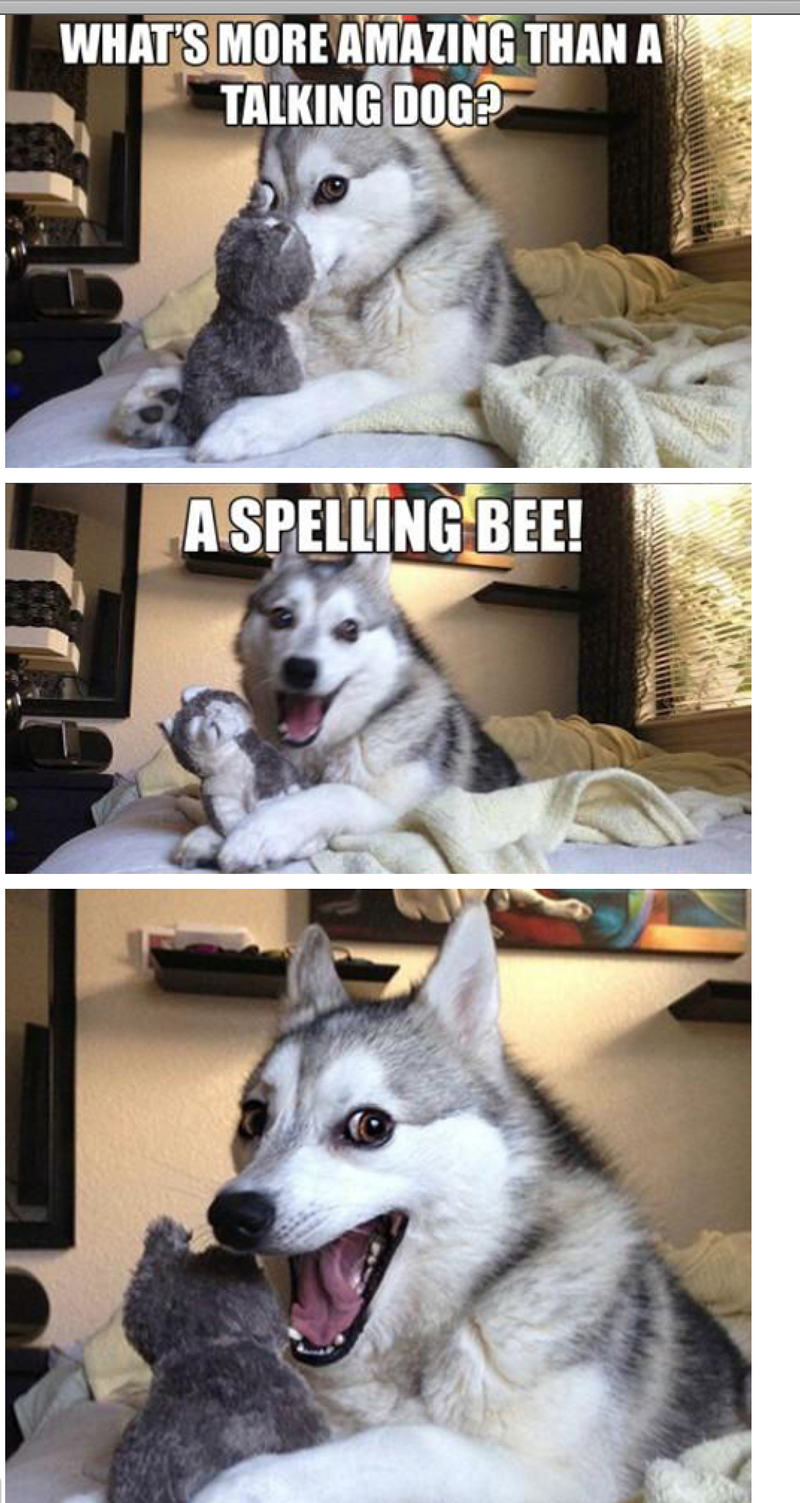 laughing dog meme Gallery