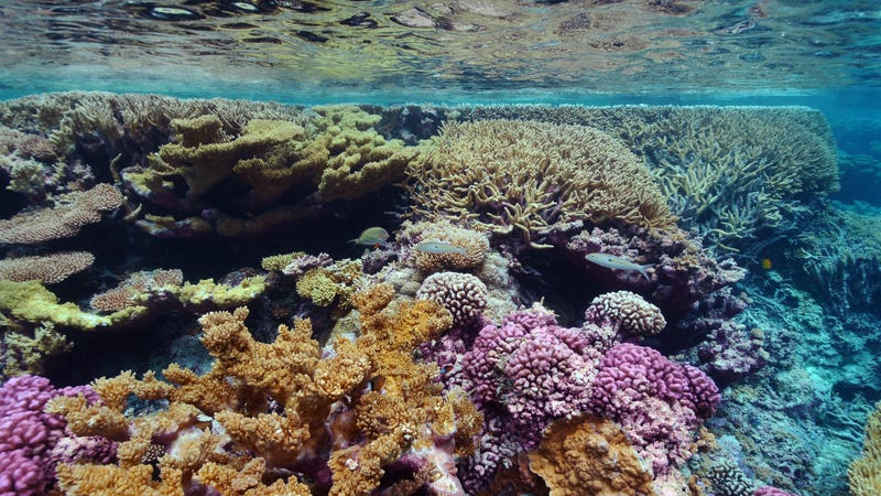 A coral reef at the Palmyra Atoll National Wildlife Refuge. Image: USFWS-Pacific Region/Flickr