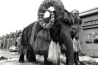 Illustration for article titled Photos of an elephant dressing up as the bantha from Star Wars