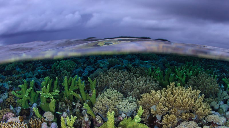 A shallow water reef in New Ireland Province, Papua New Guinea